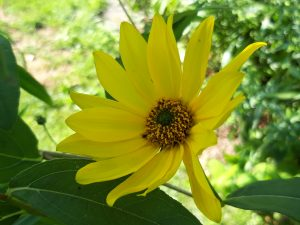 Fotografie CreaHeart: Gele vrolijke bloem