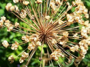 Foto gouden bloem