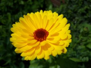 Fotografie CreaHeart: Gele bloem